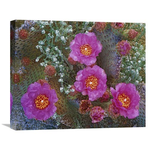 Global Gallery Beavertail Cactus Flowering, Arizona By Tim Fitzharris, 18 X 22-Inch Wall Art