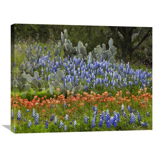 Global Gallery Bluebonnet And Pricky Pear Cactus, Texas By Tim Fitzharris, 24 X 32-Inch Wall Art