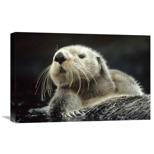 Global Gallery Sea Otter Floating In Kelp, North America By Tim Fitzharris, 16 X 24-Inch Wall Art