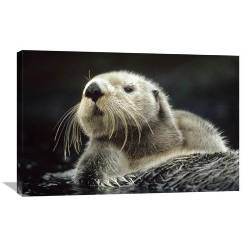 Global Gallery Sea Otter Floating In Kelp, North America By Tim Fitzharris, 24 X 36-Inch Wall Art