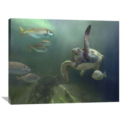 Global Gallery Green Sea Turtle And Fish, Sabah, Malaysia By Tim Fitzharris, 30 X 40-Inch Wall Art