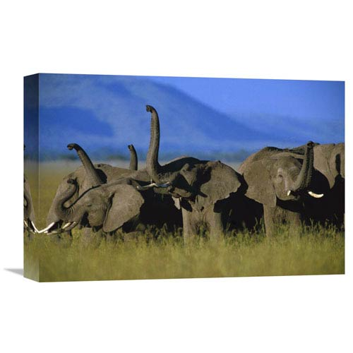 Global Gallery African Elephant Herd Sniffing The Air, Kenya By Tim Fitzharris, 12 X 18-Inch Wall Art