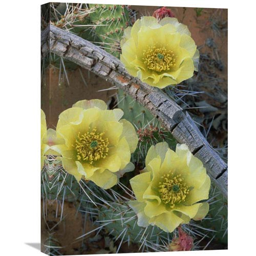 Global Gallery Plains Pricklypear Arches National Park, Utah By Tim Fitzharris, 24 X 18-Inch Wall Art