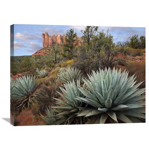 Global Gallery Agave And Coffee Pot Rock Near Sedona, Arizona By Tim Fitzharris, 24 X 32-Inch Wall Art
