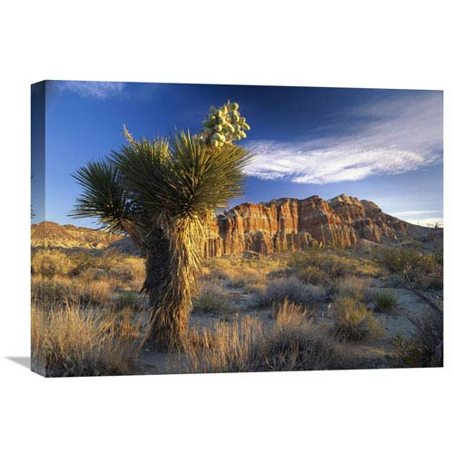 Global Gallery Joshua Tree At Red Rock State Park, California By Tim Fitzharris, 18 X 24-Inch Wall Art