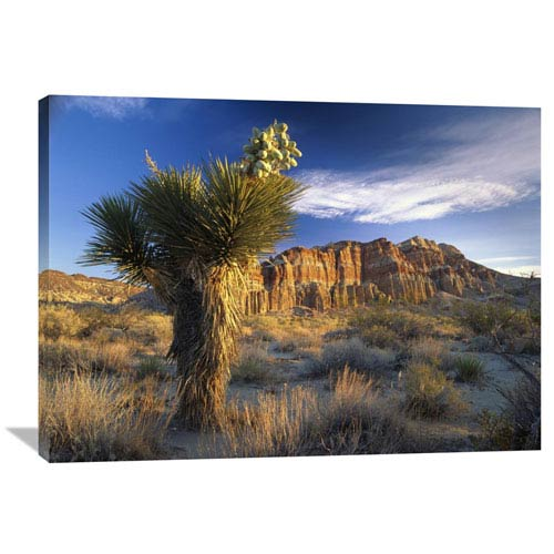 Global Gallery Joshua Tree At Red Rock State Park, California By Tim Fitzharris, 30 X 40-Inch Wall Art