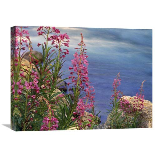 Global Gallery Fireweed Against Flowing Stream, North America By Tim Fitzharris, 18 X 24-Inch Wall Art