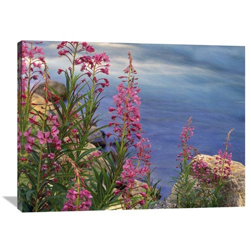 Global Gallery Fireweed Against Flowing Stream, North America By Tim Fitzharris, 30 X 40-Inch Wall Art