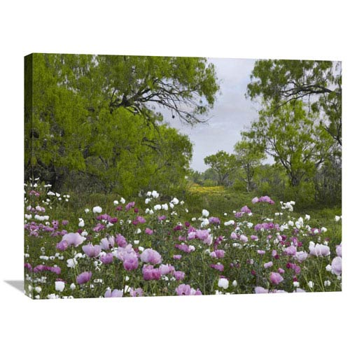 Global Gallery Long Pricklyhead Poppy Field Near Christine, Texas By Tim Fitzharris, 24 X 32-Inch Wall Art