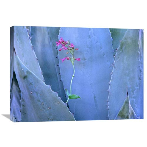 Global Gallery Agave And Parrys Penstemon Close Up, North America By Tim Fitzharris, 24 X 32-Inch Wall Art