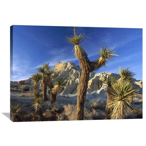 Global Gallery Joshua Trees In Red Rock Canyon State Park, California By Tim Fitzharris, 30 X 40-Inch Wall Art
