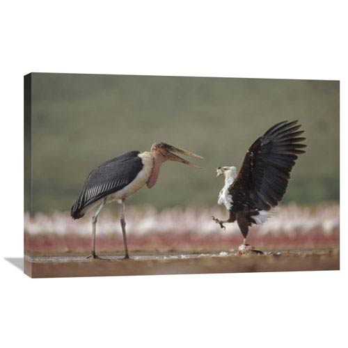Global Gallery African Fish Eagle Quarreling With Marabou Stork Kenya By Tim Fitzharris, 24 X 36-Inch Wall Art