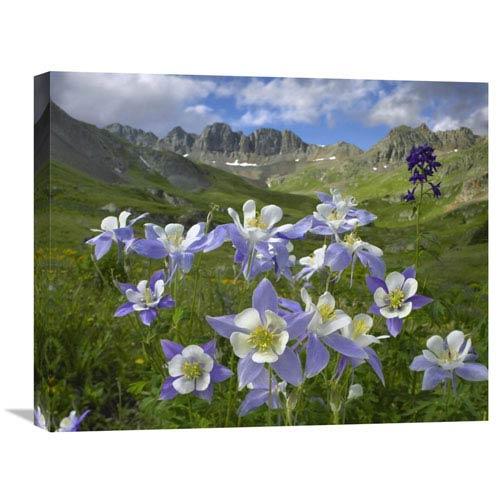 Global Gallery Colorado Blue Columbine Meadow At American Basin, Colorado By Tim Fitzharris, 20 X 24-Inch Wall Art