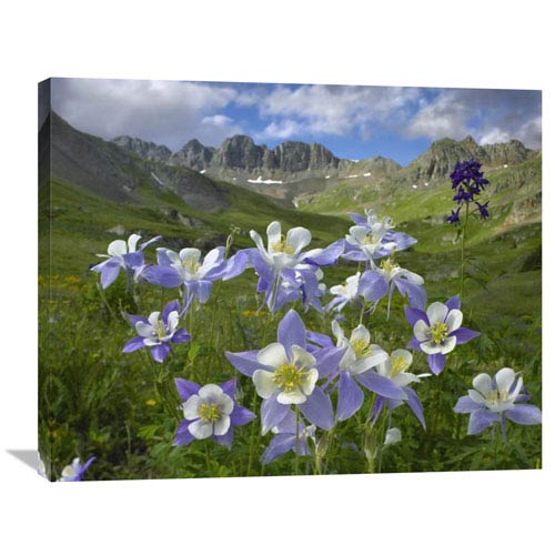 Global Gallery Colorado Blue Columbine Meadow At American Basin, Colorado By Tim Fitzharris, 28 X 35-Inch Wall Art