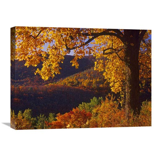 Global Gallery Autumn Deciduous Forest, Shenandoah National Park, Virginia By Tim Fitzharris, 18 X 24-Inch Wall Art