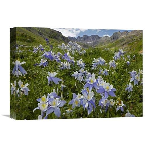 Global Gallery Colorado Blue Columbine Flowers In American Basin, Colorado By Tim Fitzharris, 12 X 16-Inch Wall Art