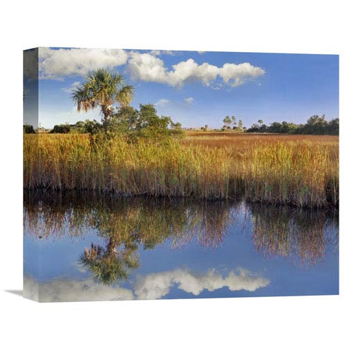 Global Gallery Cabbage Palm In Wetland, Fakahatchee State Preserve, Florida By Tim Fitzharris, 13 X 16-Inch Wall Art
