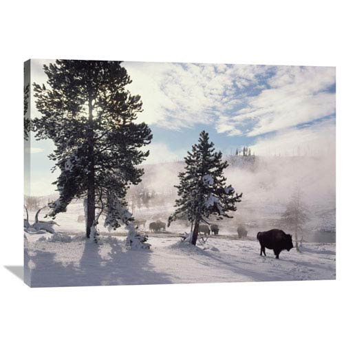 Global Gallery American Bison In Winter, Yellowstone National Park, Wyoming By Tim Fitzharris, 30 X 40-Inch Wall Art