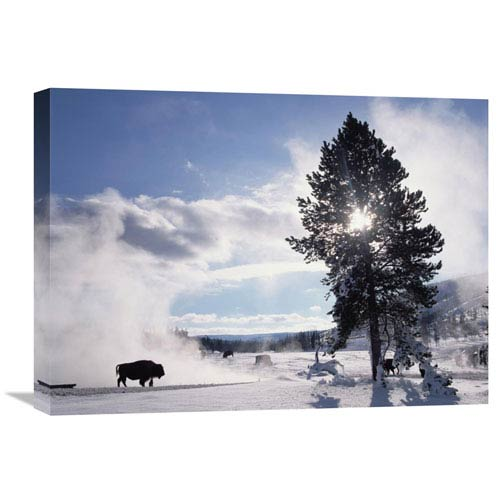 Global Gallery American Bison In Winter, Yellowstone National Park, Wyoming By Tim Fitzharris, 18 X 24-Inch Wall Art
