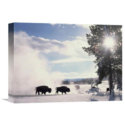 Global Gallery American Bison In Winter, Yellowstone National Park, Wyoming By Tim Fitzharris, 12 X 16-Inch Wall Art