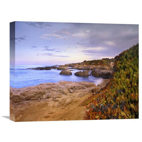 Global Gallery Ice Plant Growing On Cliffs At Bean Hollow Beach, California By Tim Fitzharris, 16 X 20-Inch Wall Art