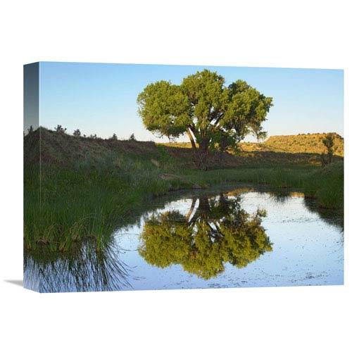 Global Gallery Tree Reflecting In Creek Near Black Mesa State Park, Oklahoma By Tim Fitzharris, 12 X 16-Inch Wall Art
