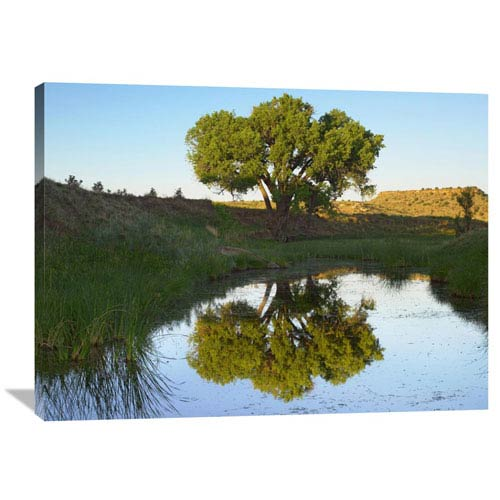 Global Gallery Tree Reflecting In Creek Near Black Mesa State Park, Oklahoma By Tim Fitzharris, 30 X 40-Inch Wall Art