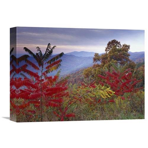 Global Gallery Staghorn Sumac In Autumn, Blue Ridge Mountain Range, Virginia By Tim Fitzharris, 12 X 16-Inch Wall Art