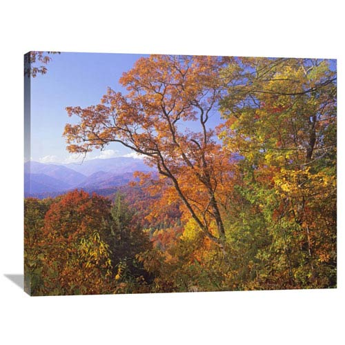 Global Gallery Great Smoky Mountains From, Blue Ridge Parkway, North Carolina By Tim Fitzharris, 30 X 40-Inch Wall Art