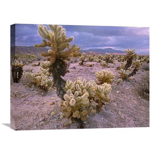 Global Gallery Teddy Bear Cholla Cacti, Joshua Tree National Park, California By Tim Fitzharris, 18 X 24-Inch Wall Art