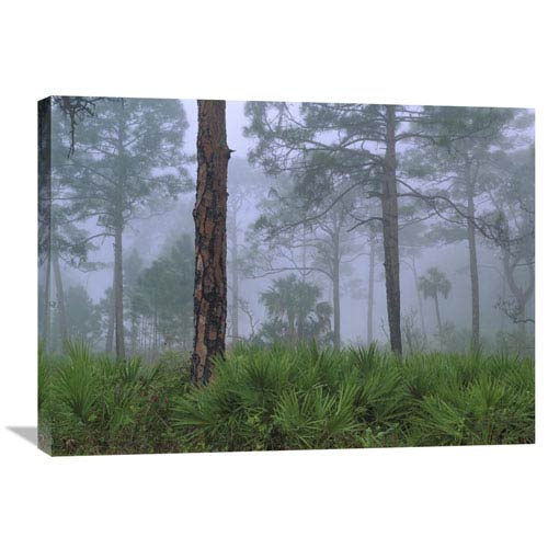 Global Gallery Saw Palmetto And Pine Trees In Fog, Near Estero River, Florida By Tim Fitzharris, 24 X 32-Inch Wall Art