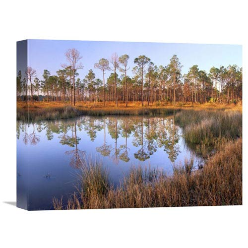 Global Gallery Pines Reflected In Pond Near Piney Point, Hagens Cove, Florida By Tim Fitzharris, 12 X 16-Inch Wall Art