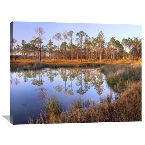 Global Gallery Pines Reflected In Pond Near Piney Point, Hagens Cove, Florida By Tim Fitzharris, 30 X 40-Inch Wall Art