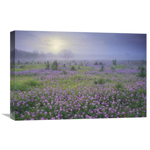 Global Gallery Sand Verbena Flower Field At Sunrise In Fog, Hill Country, Texas By Tim Fitzharris, 16 X 24-Inch Wall Art