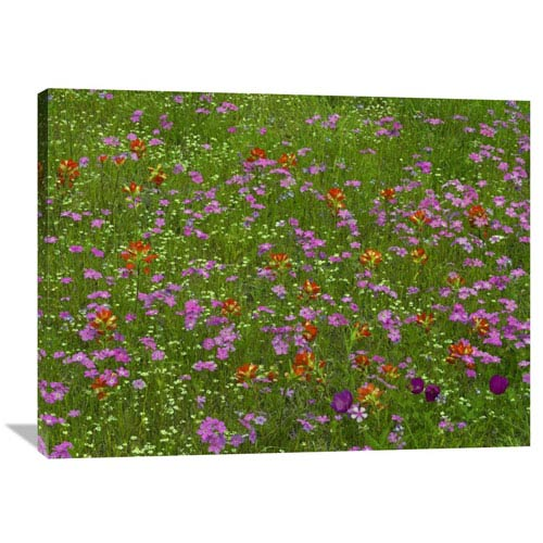 Global Gallery Pointed Phlox And Indian Paintbrushes In Bloom, Hill Country, Texas By Tim Fitzharris, 30 X 40-Inch Wall Art