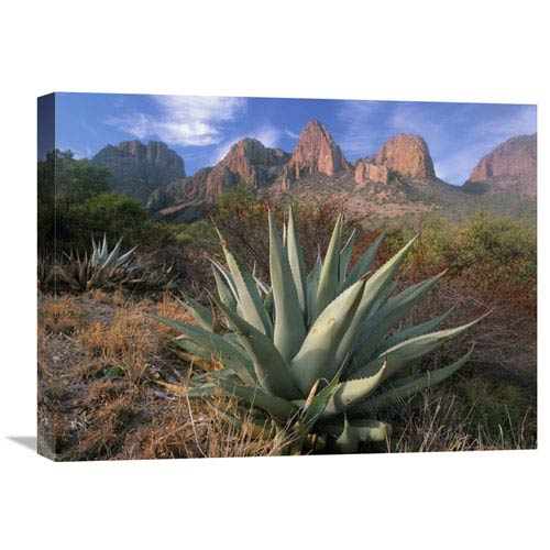 Global Gallery Chisos Agave And The Chisos Mountains, Big Bend National Park, Texas By Tim Fitzharris, 18 X 24-Inch Wall Art