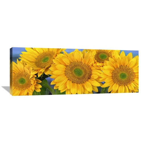 Global Gallery Common Sunflower Group Showing Symmetrical Seed Heads, North America By Tim Fitzharris, 16 X 44-Inch Wall Art