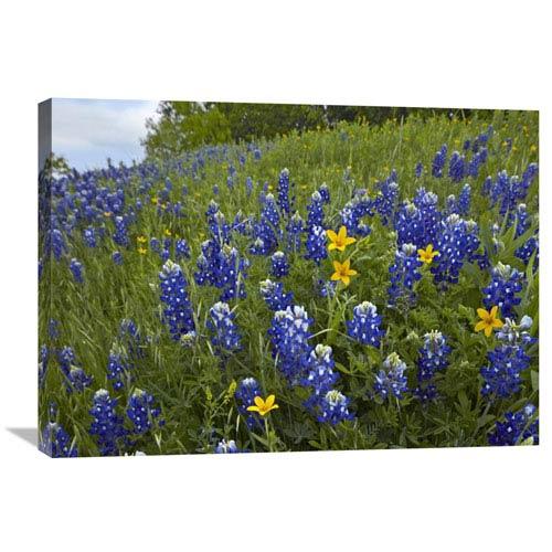 Global Gallery Bluebonnet And Texas Yellowstar Meadow, Cedar Hill State Park, Texas By Tim Fitzharris, 24 X 32-Inch Wall Art