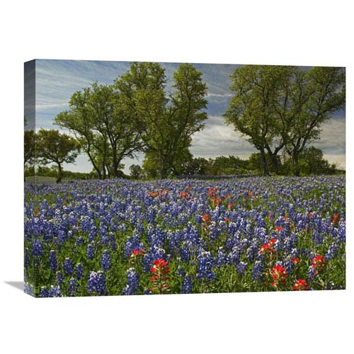 Global Gallery Sand Bluebonnets And Indian Paintbrush In Bloom, Hill Country, Texas By Tim Fitzharris, 18 X 24-Inch Wall Art