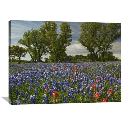 Global Gallery Sand Bluebonnets And Indian Paintbrush In Bloom, Hill Country, Texas By Tim Fitzharris, 30 X 40-Inch Wall Art