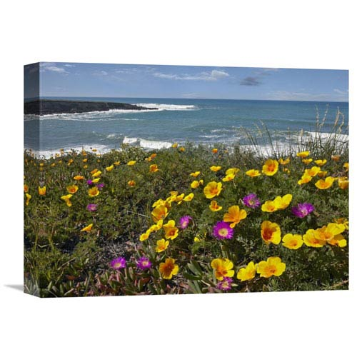 Global Gallery California Poppy And Iceplant, Montano De Oro State Park, California By Tim Fitzharris, 12 X 16-Inch Wall Art
