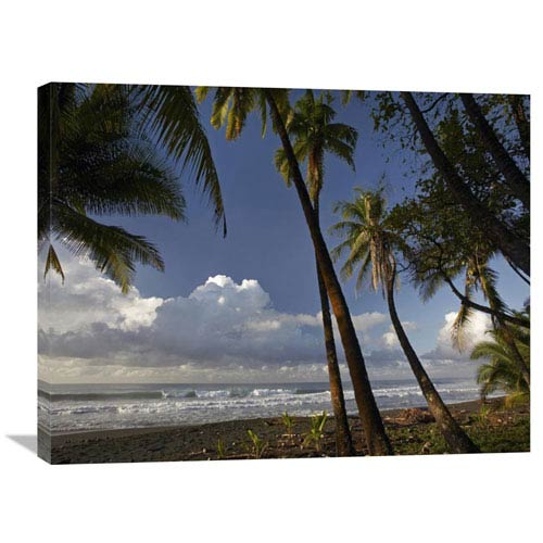 Global Gallery Palm Trees On The Beach Near Marino Ballena National Park, Costa Rica By Tim Fitzharris, 24 X 32-Inch Wall Art