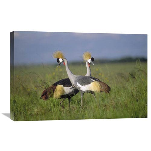 Global Gallery Grey Crowned Crane Couple Courting, Masai Mara National Reserve, Kenya By Tim Fitzharris, 20 X 30-Inch Wall