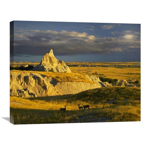Global Gallery Mule Deer Trio In The Grasslands Of Badlands National Park, South Dakota By Tim Fitzharris, 22 X 28-Inch Wall
