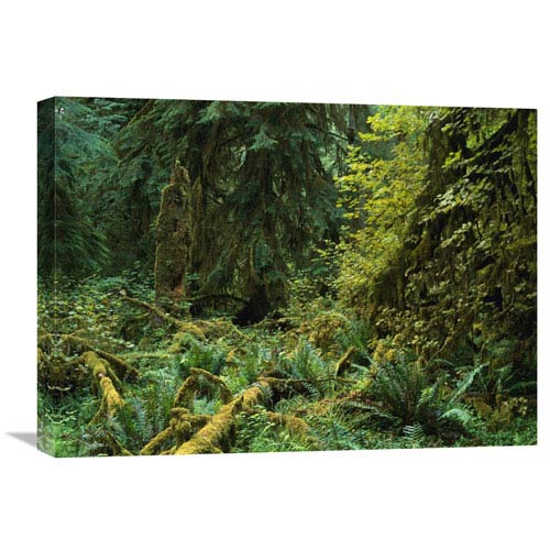Global Gallery Lush Vegetation In The Hoh Rain Forest, Olympic National Park, Washington By Tim Fitzharris, 18 X 24-Inch Wall
