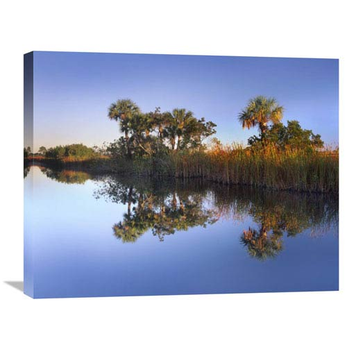 Global Gallery Royal Palms And Reeds Along Waterway, Fakahatchee State Preserve, Florida By Tim Fitzharris, 22 X 28-Inch Wall