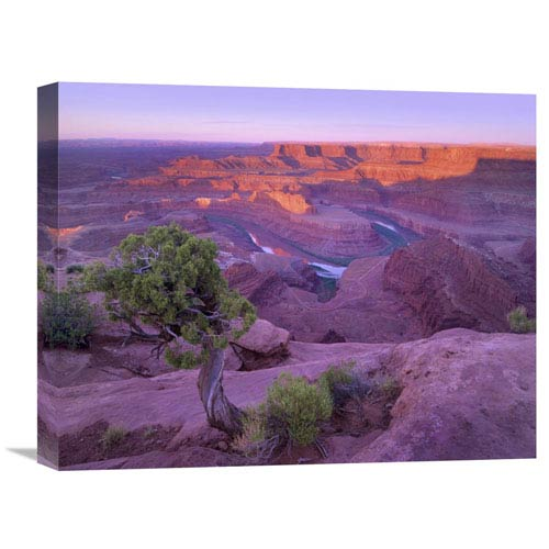 Global Gallery Colorado River Flowing Through Canyons Of Dead Horse Point State Park, Utah By Tim Fitzharris, 16 X 20-Inch