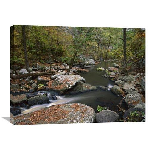 Global Gallery Cedar Creek Flowing Through Deciduous Forest, Petit Jean State Park, Arkansas By Tim Fitzharris, 24 X 32-Inch
