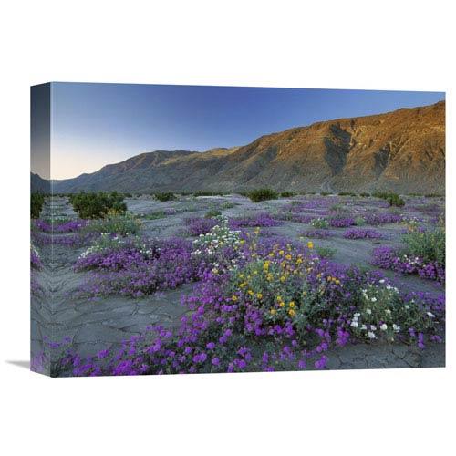 Global Gallery Sand Verbena And Desert Sunflowers Anza Borrego Desert State Park, California By Tim Fitzharris, 12 X 16-Inch