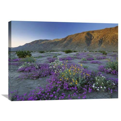 Global Gallery Sand Verbena And Desert Sunflowers Anza Borrego Desert State Park, California By Tim Fitzharris, 24 X 32-Inch